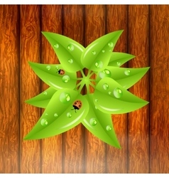 Green leaves with dew drops and ladybugs vector