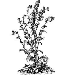 plant brassica napus vector image