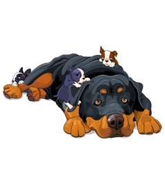 Rottweiler Family vector image