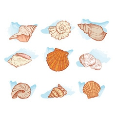 sea shell set color vector image