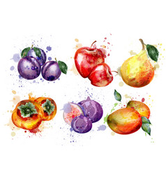Watercolor fruits set apple plum pear vector