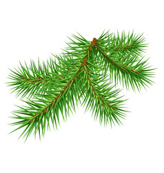green pine branch on white background vector image vector image