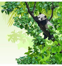 cartoon panda sitting on a tree in the jungle vector image