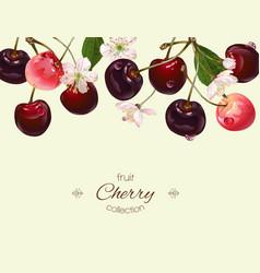 Cherry banner vector