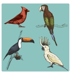 Hand drawn realistic bird sketch graphic vector