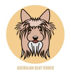 portrait australian silky terrier vector image