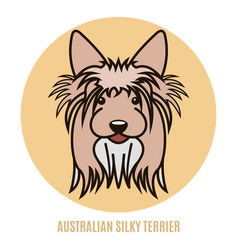 portrait of australian silky terrier vector image
