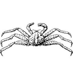 spider paralithodes camtschatica vector image