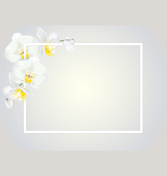 white orchids and frame vector image