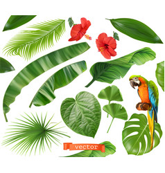 botany set leaves and flowers tropical plants vector image