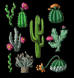 cacti with flowers isolated on a black background vector image