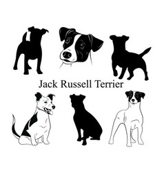 set jack russell terrier collection vector image