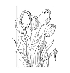 Tulip flowers coloring book vector image