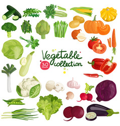 vegetables and herbs collection vector image vector image