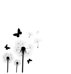 dandelion seeds blown in the wind vector image