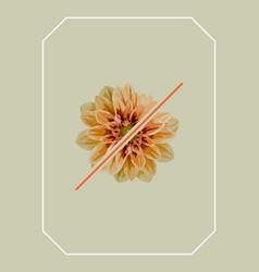 Half orange dahlia flower vector