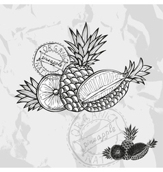 Hand drawn decorative pineapple fruits vector image