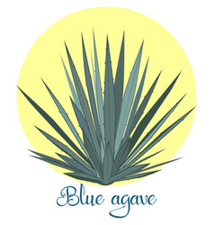Tequila agave or blue agave vector