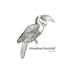 Wreathed hornbill hand draw sketch vector