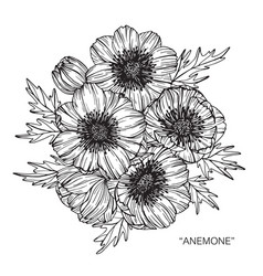 Anemone flower drawing vector