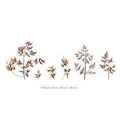 Autumn leaf tree branches designer art different vector