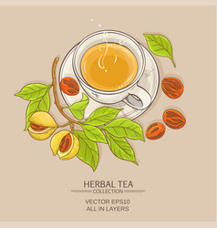 cup of nutmeg tea vector image