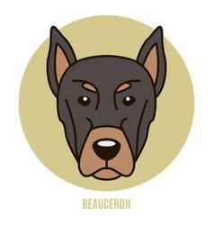 Portrait of beauceron vector