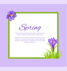 Spring poster with text in frame colorful bouquet vector