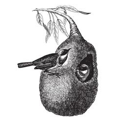 Vintage Penduline Tit Sketch vector image vector image