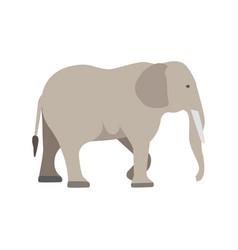 Flat elephant on white background vector