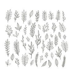 hand drawn vintage botanical collection vector image