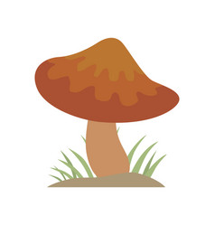 poisonous brown mushroom nature food vegetarian vector image