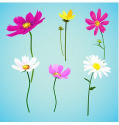 set wild summer flowers vector image