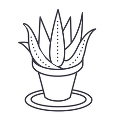 succulents aloe pot line icon sign vector image vector image