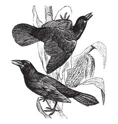 Vintage grackle Sketch vector image vector image