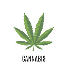 cannabis sign isolated on white background vector image