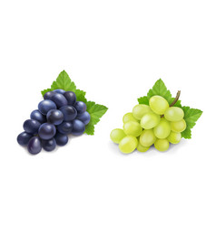 red and white table grapes wine grapes bunch vector image