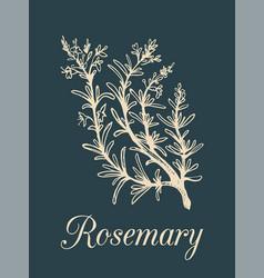 Rosemary branch hand drawn vector