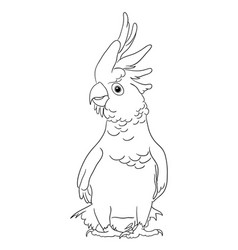 Cockatoo bird line art 04 vector