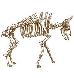engraving of bison skeleton vector image