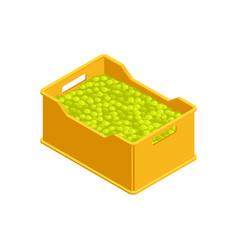 Harvest isometric vector