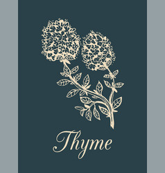 Thyme branch with flowers vector