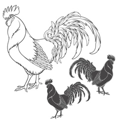 Rooster or cock hand drawn sketch isolated vector image vector image