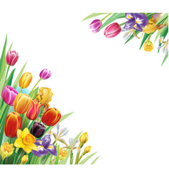 arrangement with multicolor tulips flowers vector image