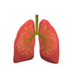 Healthy lungs organ metaphor flat vector