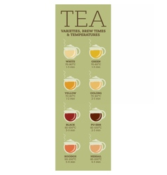Tea varieties Brewing time and temperature vector image