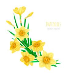 yellow realistic daffodils decorative vector image