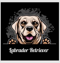 color dog head labrador retriever breed on black vector image