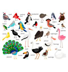 european and asian bird set vector image vector image