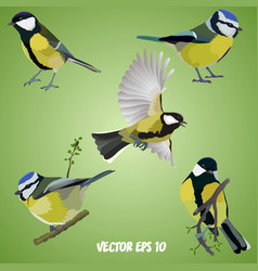 Set of realistic tits on a light green background vector
